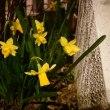 3月の活け花とカレンダー