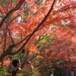 万博公園の紅葉は見ごろです