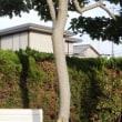 庭木の防腐