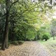 散歩の公園