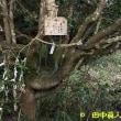 鵜山・真福寺のオコナイ