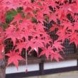 「今年の紅葉は」