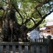 大山祇神社お参りしました