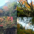 H29  八面山神護寺  紅葉