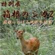 箱根ビジターセンター シカ展2