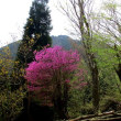 野乃隅原から深山と黒尾山