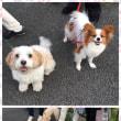 野川散歩でみんなに会えたよ