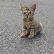 海辺の子猫、はぐれ猫?