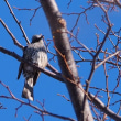 鳥獣保護区の鳥