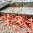 秋風に乗り