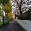 色づく 晩秋,初冬