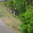 夏の草刈り@野々池貯水池