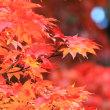 晩秋深まる