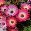 花見 in 中央公園