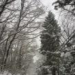 いきなりの大雪です。