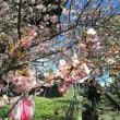 2018まつだ桜開花情報2月20日、