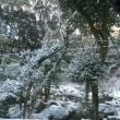 雪積もってます。