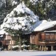 冬の兼六園 ③