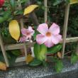 中新井散歩・秋の花(3)