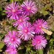 美しいピンク色の花々