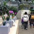 咲くやこの花館 秋の洋ラン展(2017年11月)レポート