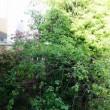 庭の剪定を2年半ぶりにやってもらった