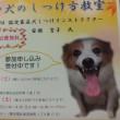 飼い犬のしつけ方教室開催のお知らせ。