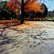 昭和記念公園の今
