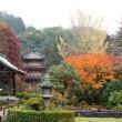 11月18日(土) 京都 紅葉散歩