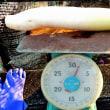 大根の「麹漬け」下準備:塩漬け60kg