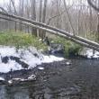 久しぶりの小河川