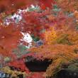 日経カルチャー主催!「11/28-30今回光明寺特別拝観と京都木津川紅葉詣り」
