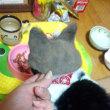 ガブの毛でガブ帽子を創ってみました