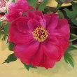 第29回いしかわ四季の花協会展に行って来ました。NO.5(小原流)