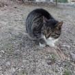 野良猫のんちゃんと家猫のんちゃんとの比較