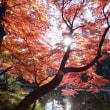 東京の京都 渡月橋~通天橋 の紅葉!