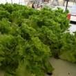 めぐりーんさんの水耕栽培のレタスはめっちゃ大人気なんですよ。
