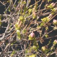 札幌の『春』見~つけた(≧艸≦*)