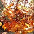 葉と花芽・冬の花柄・・早春の花・・京都府立植物園。
