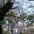 名古屋城観光