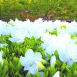 咲き急ぐ春の花達。
