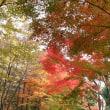 東京富士美術館の常設展