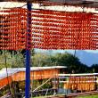 青空に串柿が映えて-和歌山県かつらぎ町:四郷