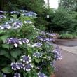 あじさいの咲く小公園