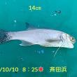 笑転爺の釣行記 10月10日☀ 斉田浜
