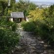 古寺に咲く萩の花