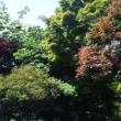 5月22日(火) 庭の草取り