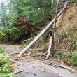 台風21号の被害状況
