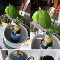 花芽 と バジル と 灯油