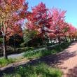 楽しい園芸 秋イッパイ